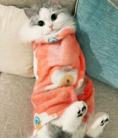 Excellent pretty cats information are offered on our web pages. Check it out and you will not be sorry you did. Cute Baby Cats, Cute Cats And Kittens, Cute Baby Animals, I Love Cats, Crazy Cats, Kittens Cutest, Funny Animals, Sleepy Animals, Pretty Cats