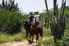 Cabalgando por el bosque de cactus