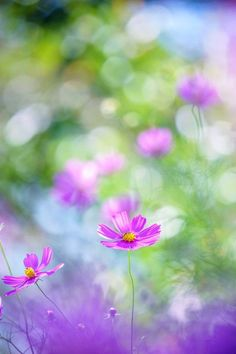 Choose best garden supplies, outdoor living accessories and patio aceessories on newchic. All kinds of garden & outdoor supplies are hot selling, artistic and functional. Amazing Flowers, Purple Flowers, Wild Flowers, Beautiful Flowers, Orquideas Cymbidium, Cosmos Flowers, Flower Pictures, Flower Wallpaper, Cute Wallpapers
