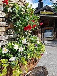 Exterior fireplace flowers