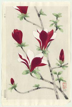 Japanese Magnolia by Nisaburo Ito – Japanese Woodblock Print Japanese Painting, Chinese Painting, Chinese Art, Illustration Botanique, Illustration Blume, Cat Flowers, Colorful Flowers, Botanical Drawings, Botanical Prints