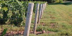 Coyote's Run Estate Winery. Niagara on the Lake, Ontario, Canada. Wine Country, Ontario, Arch, Canada, Outdoor Structures, Garden, Plants, Bow, Garten