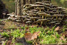 Autumn mushrooms or fungi at Kaapse bossen Doorn, the Netherlands