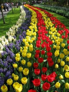 Flower Park Keukenhof, The Netherlands. Source: http://furkl.com/ Online Appearance: http://appearoo.com/SubratoPaul