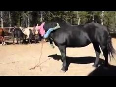 This little girl has her own way of getting on a horse!   clickworthy