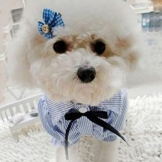 Elegantly Designed Bubble Sleeve Pet, Dog Dress