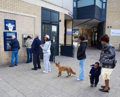 Funny pictures about Just a fox at the ATM. Oh, and cool pics about Just a fox at the ATM. Also, Just a fox at the ATM. Funny Animal Pictures, Funny Photos, Funny Animals, Cute Animals, Weird Pictures, Wild Animals, Funny Images, Bizarre Photos, Strange Photos