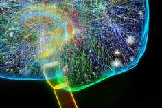 We really DO have internet on the brain: Researchers find neural 'wiring' is similar to structure of online networks [Neurotechnology: http://futuristicnews.com/tag/brain/ Neuroscience Books: http://futuristicshop.com/category/neuroscience-books-neurotechnology-books/]