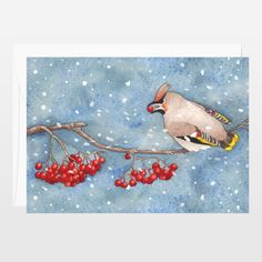 Winter cards collection. New on @boomboomprints #greetingscard #thekittensfamily #illustrations #books #art #artprint #cute #snow #birds #berries  #Waxwing Fun Indie Art from BoomBoomPrints.com! https://www.boomboomprints.com/Product/barbarajelenkovich/Birds_and_berries_Bombycilla_garrulus/Flat_Cards/25_35x5_Cards/
