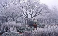Hoar frost on a winter garden from article by Rochelle Greayer. After reading article, I realize that I should think about the sculptural quality of the plants in my garden in the fall before I put the beds to sleep for the winter and maybe cut less down.