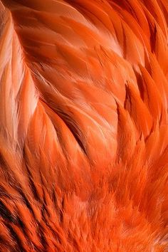 texture - orange flamingo feathers by Old-Man-George Organic Forms, Foto Macro, Orange Aesthetic, Rainbow Aesthetic, Orange You Glad, Orange Crush, Orange Is The New Black, Wassily Kandinsky, Happy Colors