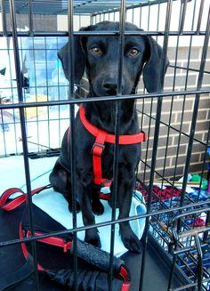 Dixon - Dickson Petco Adopt-a-thon February 2016 Last Chance Pet Rescue (lastchancepetrescue-dickson@yahoo.com)