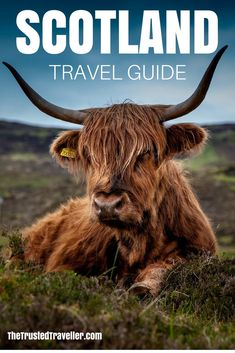 One of many great free stock photos from Pexels. This photo is about nature, scottish hochlandrind, sky Scottish Highland Cow, Highland Cattle, Scottish Highlands, Farm Animals, Animals And Pets, Cute Animals, Strange Animals, Beautiful Creatures, Animals Beautiful