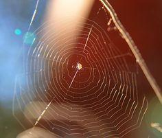 Spider web - Telaraña | Flickr - Photo Sharing!