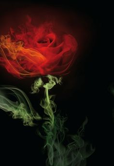 I want to learn to be better at photoshop. I wish I had time. Smoke Art, Up In Smoke, Photoshop, Image Nature, Fire Art, Colorful Roses, Photomontage, Beauty And The Beast, Red Roses