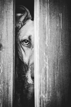 The Guardian by Elke Vogelsang. ☀