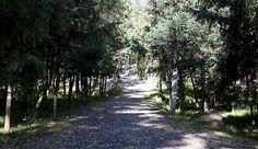 Hermosos senderos del Bosque, de MI bosque, al que amo!!