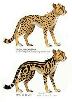 Cheetah king - Disney - Home Cheetah Drawing, Furry Drawing, Cat Drawing, Big Cats Art, Furry Art, Cat Art, Cute Animal Drawings, Animal Sketches, Anime Animals