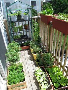 Balcony Herb Gardens, Apartment Balcony Garden, Small Balcony Garden, Small Space Gardening, Balcony Gardening, Urban Gardening, Apartment Gardening, Apartment Vegetable Garden, Organic Gardening
