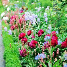 Peonies in a herbaceous border. Jorge Salcedo/Shutterstock.com