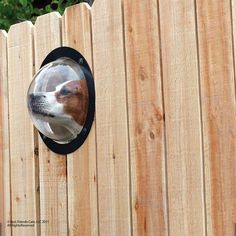 I am SO going to get this so the dogs can see out of the fence.  On second thought...nose prints & dog slobber may obscure the view.