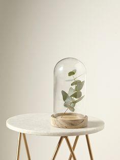 Cloche en verre - Verre / bois - 1