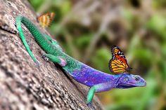 Lizard & friend