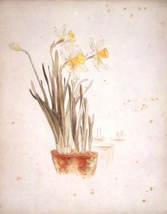 Botanical illustrations at the Victoria & Albert Museum. Shown is one of Beatrix Potter's beautiful renderings.