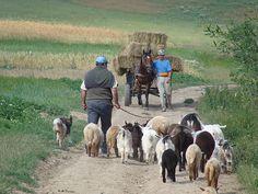 Rural Life - Transylvania Country Life, Country Roads, Transylvania Romania, Funny Farm, Shepherds Hut, The Good Shepherd, Peaceful Life, English Countryside, Lambs