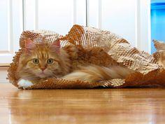Comportamento gatos
