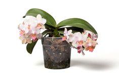 Orchids, Planter Pots, Decor, Decoration, Decorating, Orchid, Deco