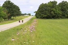 Celebrating Bike Travel at Home: Missouri's U.S. Bicycle Route 76 | Adventure Cycling Association