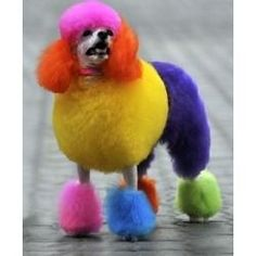 If I had a white poodle, I would do this