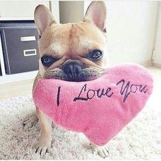 Asi cualquiera se enamora <3. ..