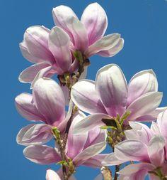 magnolie 39 satisfaction 39 neuheiten online kaufen bestellen magnolien pinterest. Black Bedroom Furniture Sets. Home Design Ideas