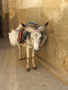 Fez, Morocco - I want to save all the working horses and donkies. They are so beautiful and deserve comfy lives and lots of love and massages. Mexican Connection, Visit Egypt, Work With Animals, Color Harmony, African Countries, Animal Faces, Moroccan Style, Donkey, Farm Animals