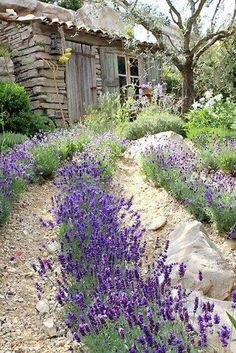 Magical house and garden decoration with lavender - Garden Decor Lavender Cottage, Lavender Garden, Lavender Fields, Lavender Flowers, Lavander, Natural Garden, Purple Roses, Tuscan Garden, Garden Cottage