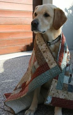 """Lynnette Anderson's pup """"Hugo"""" cuddling up in one of her quilts - sweet"""