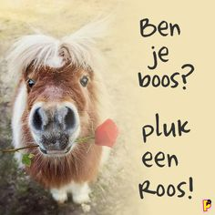 Are you angry? Just Take a rose! Cowboy Quotes, Horse Quotes, Cowgirl And Horse, Horse Riding, Animals And Pets, Funny Animals, Cute Animals, Pretty Horses, Beautiful Horses