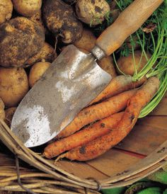 Grow a vegetable garden to save money: recommended plants
