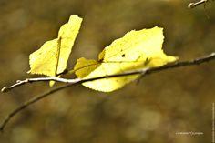"""Купить Фотокартина серия """"Золотая осень"""" - фотокартина, природа, пейзаж, вода, фотокартина для интерьера"""