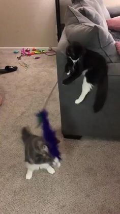 When one is smarter then the other. - My list of the most beautiful animals Funny Cute Cats, Cute Kittens, Cute Funny Animals, Cute Baby Animals, Funny Dogs, Animals And Pets, Cats And Kittens, Cute Animal Videos, Animal Jokes