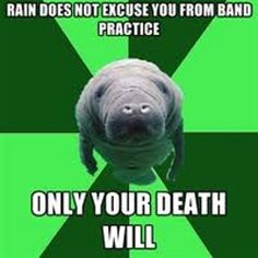 seacow marching band meme Marching Band Problems, Marching Band Memes, Band Jokes, Music Memes, Music Bands, Lion, Leon, Lions, Leo