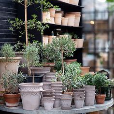 Shop terrain for earthenware planters to display indoors and out, including our timeless barnacle planter collection. Gardening For Beginners, Gardening Tips, Garden Planters, Planter Pots, Outdoor Garden Furniture, Winter Garden, Garden Projects, Houseplants, Terracotta