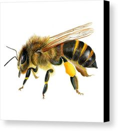 Bee Painting, Watercolor Paintings, Watercolours, Bee Pictures, Pictures Images, Bee Images, Nature Artists, Bee Art, Animals Of The World
