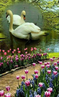 Beautiful swan and flowers Beautiful Swan, Beautiful Birds, Beautiful Images, Animals Beautiful, Pretty Birds, Love Birds, Swans, Animal Photography, Nature Photography