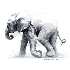 Pics For > Elephant Drawings In Pencil