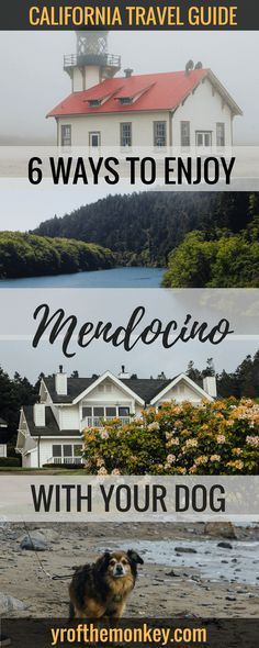 Visit Mendocino, California, USA with your dog: 6 awesome ways for dog friendly travel to Mendocino, your gateway to the California Redwoods with dog friendly hotels, restaurants and activities to keep you and your furry friend happy! #mendocino #california #USA #dogfriendly #travelwithdogs #pets