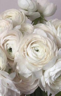 Rose Like Flowers, Flowers For Sale, Beautiful Flowers Garden, Burgundy Flowers, Cut Flowers, White Flowers, Ranunculus Wedding Bouquet, Ranunculus Flowers, Peonies