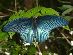 Google Image Result for http://3.bp.blogspot.com/-EyVDm6TNBTw/TacZgSgjV-I/AAAAAAAADx4/cVz-HdNS4F8/s1600/butterflies-of-thailand-screensaver.jpg